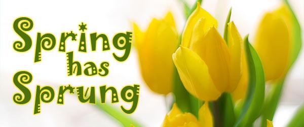 springsprung